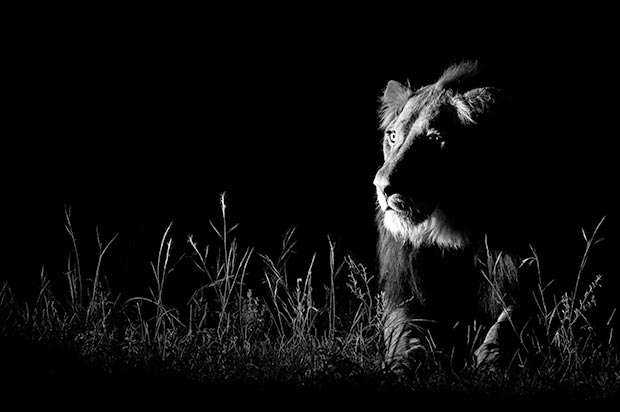 Wildlife Fotografien