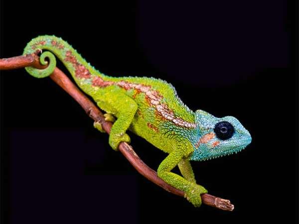Reptilien hautnah erleben