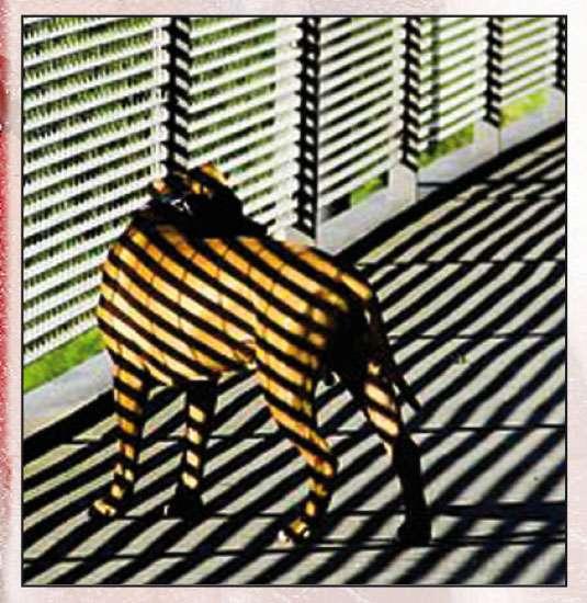 Zebra-abgehanges