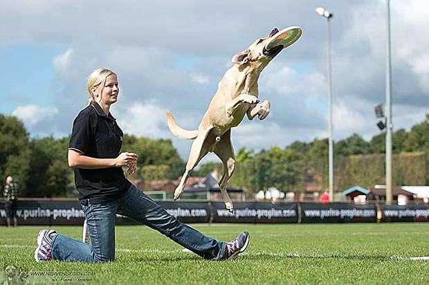 Hundefrisbeeturnier
