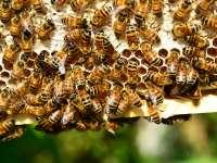 Bienen und Nachhaltigkeit