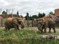 Zoo Magdeburg - Africamo