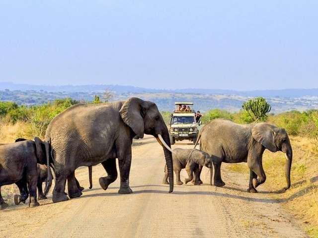 Elefanten in Uganda