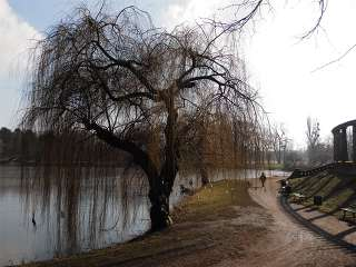 Der Magdeburger Wunschbaum