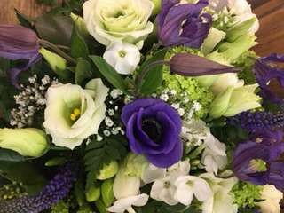 Gänseblümchen - Florist