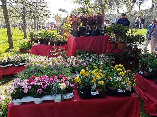 Gartenträume Hundisburg - Große Auswahl an Blumen/Pflanzen