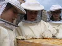Waldorfschule Bienen AG