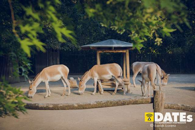 Zoonacht-2018-mit-die-Prinzen_006_Sarah-Lorenz.jpg