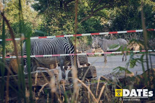 Zoonacht-2018-mit-die-Prinzen_016_Sarah-Lorenz.jpg