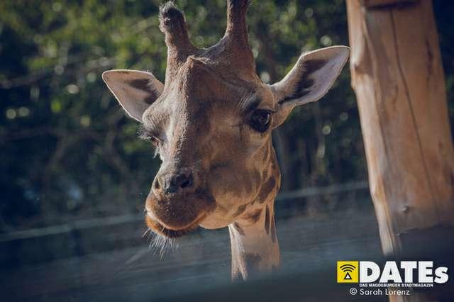 Zoonacht-2018-mit-die-Prinzen_026_Sarah-Lorenz.jpg
