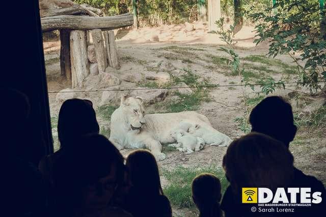 Zoonacht-2018-mit-die-Prinzen_030_Sarah-Lorenz.jpg