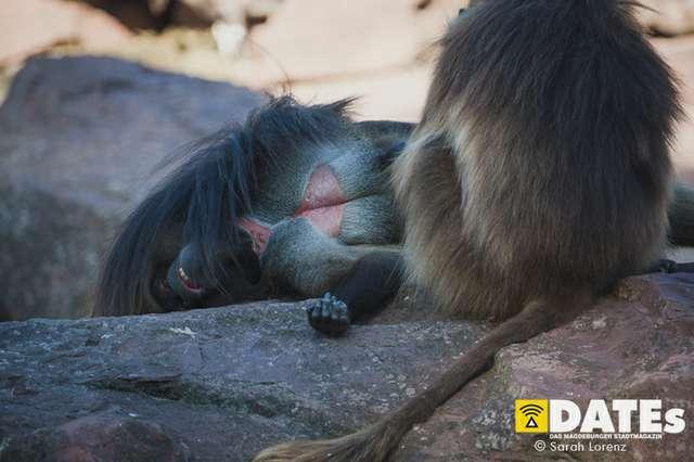 Zoonacht-2018-mit-die-Prinzen_040_Sarah-Lorenz.jpg