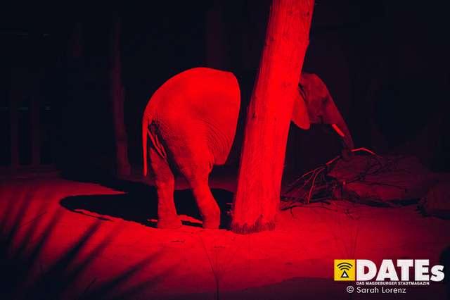 Zoonacht-2018-mit-die-Prinzen_084_Sarah-Lorenz.jpg