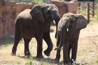 18-06-26-elefanten-moyo-und-uli-1024.jpg