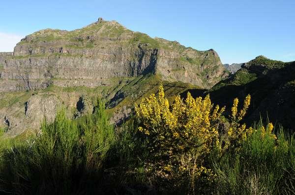 Pressebild Madeira - Pico Grande mit Ginster.JPG