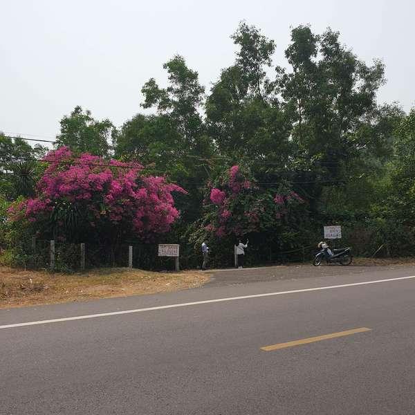 Vietnamradtour-(c)Bombach-068.jpg