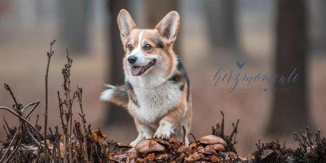 WORKSHOP Outdoor-Hundefotografie für EINSTEIGER.jpg