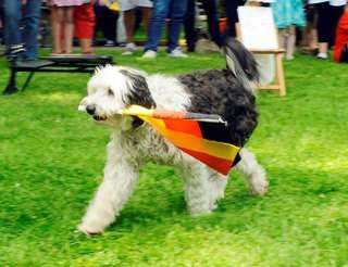 Dogtalten- Hundecasting