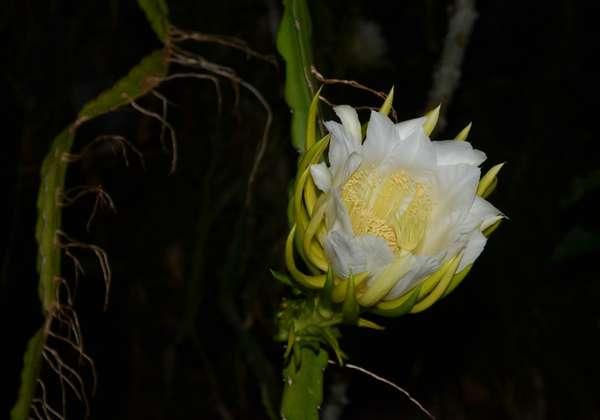 170714nächtlicheblüten.jpg