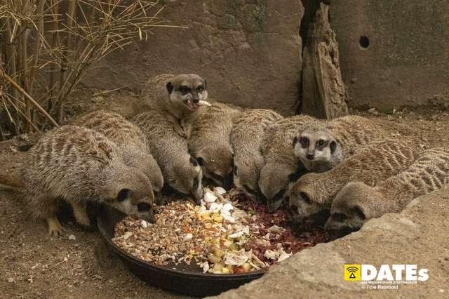 Zoo_Magdeburg-8885-Tino Reinhold.jpg