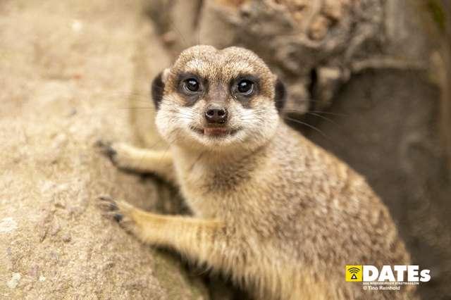 Zoo_Magdeburg-8909-Tino Reinhold.jpg