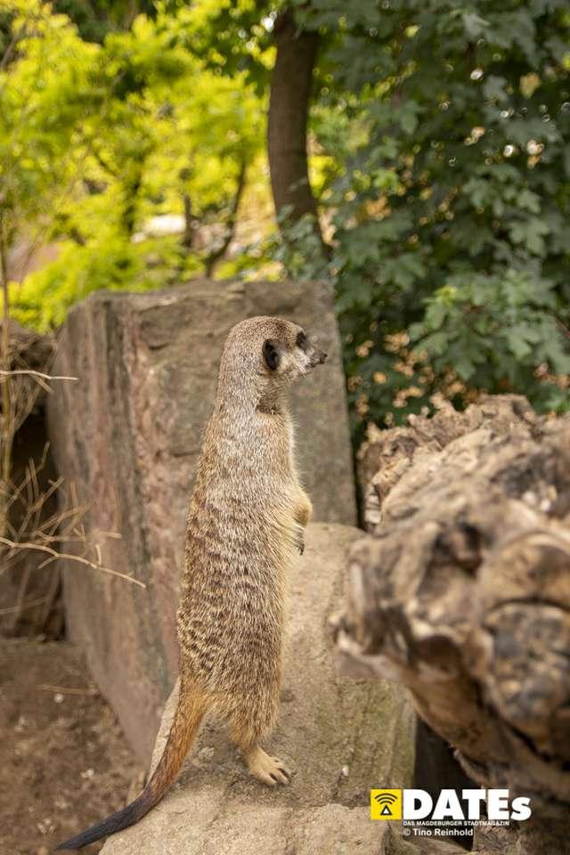 Zoo_Magdeburg-8934-Tino Reinhold.jpg