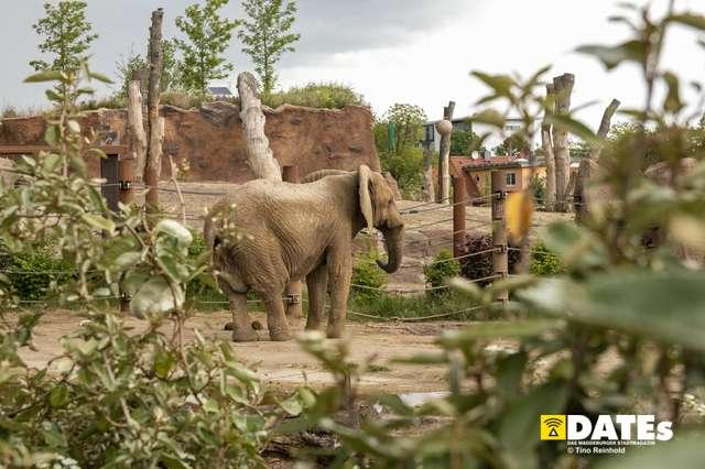 Zoo_Magdeburg-9026-Tino Reinhold.jpg