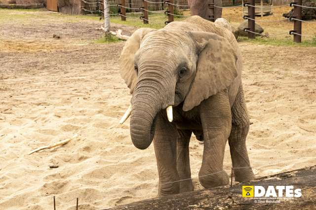 Zoo_Magdeburg-9087-Tino Reinhold.jpg