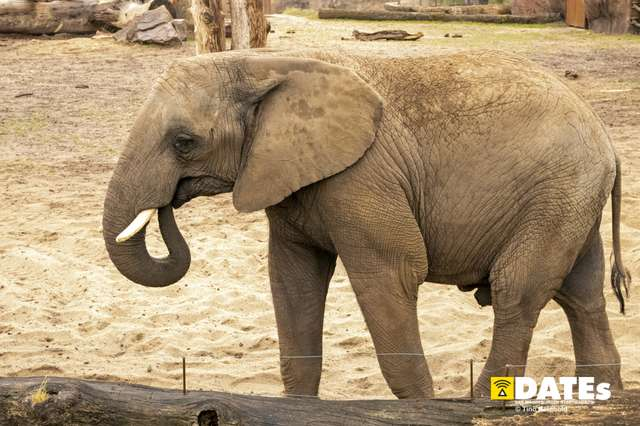 Zoo_Magdeburg-9100-Tino Reinhold.jpg
