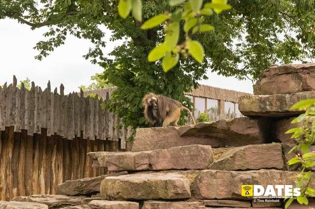 Zoo_Magdeburg-9200-Tino Reinhold.jpg