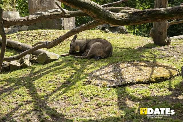 Zoo_Magdeburg-9295-Tino Reinhold.jpg