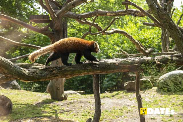 Zoo_Magdeburg-9304-Tino Reinhold.jpg