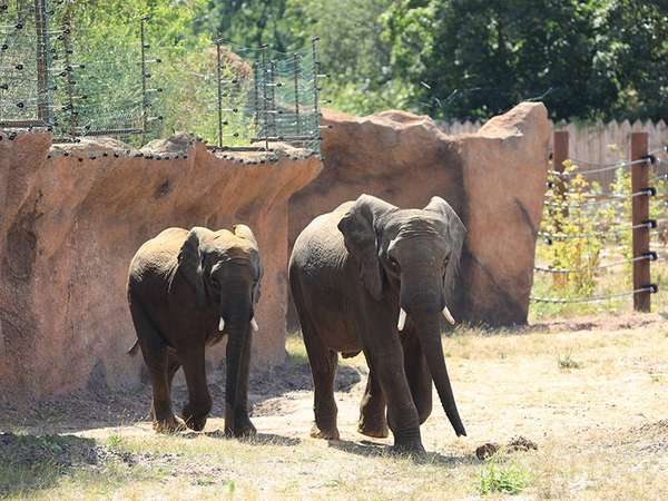 Elefanten im Africambo