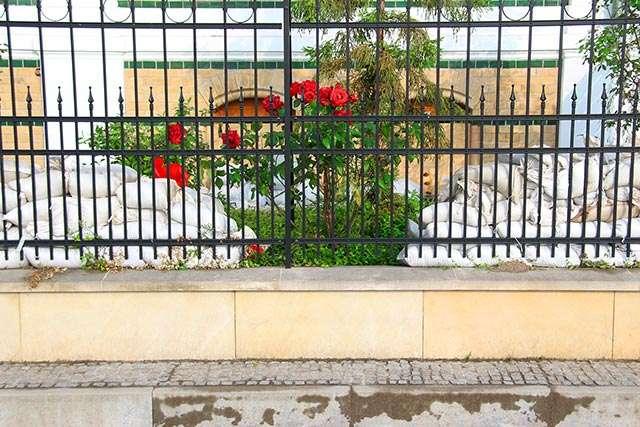 Wasserrose(Panse).jpg